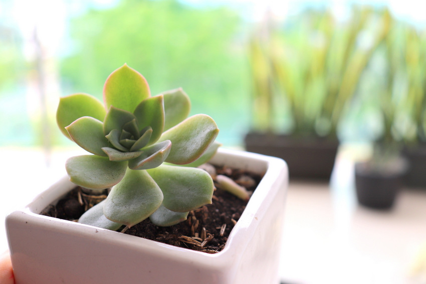 Having Succulents at Home. Life Lessons You can Learn From Your Plants | Valuable Life lessons you can learn from having and growing plants at home. This is about learning to slowdown your life and learn from those little ones. This is not about gardening, this is about life and taking care of yourself and others.